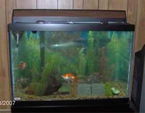 Heater & filter pump & accessories for fish tank