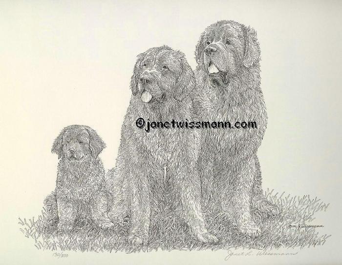FINE ART PRINT Newfoundland Newfies Newfy Family, direct from artist J. Wissmann