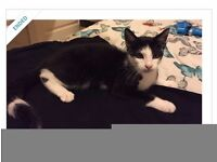 MISSING-YOUNG MALE CAT, CUMNOCK