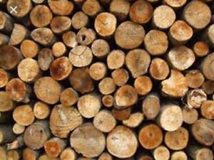 Firewood for sale 100$ a cord