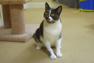 2-year-old Rescued Female Cat Needs Fur-Ever Home! London Ontario image 5
