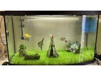 90L aquael fish tank WITH fish