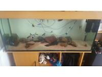 Jewel rio 48'×20×16 fish tank aquarium