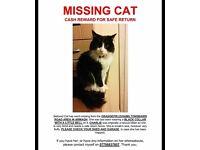 LOST CAT - CASH REWARD FOR SAFE RETURN