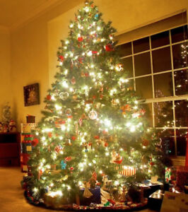 Christmas Tree CLEARANCE : Trees Up to 7.5 Feet Only $30