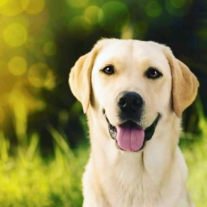 Are you looking for a reliable and affordable dog walker