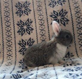 Doe bunny rabbit