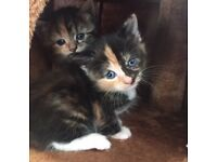 4 Adorable kittens available