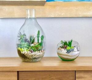 Handmade Custom Succulent and Cactus Terrariums by Gem's Plant Design in Winnipeg
