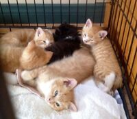 Kittens Looking for a Good Home -  Amherst, NS!
