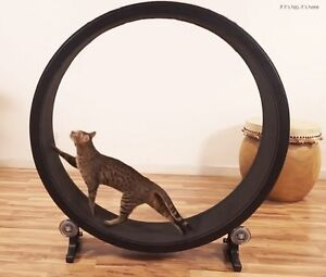 roue a chat accessoires pour animaux de compagnie. Black Bedroom Furniture Sets. Home Design Ideas