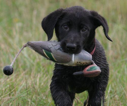 Avery Greenhead Gear GHG Dog EZ Bird GW Teal ATB Training Bumper Dummy Drake