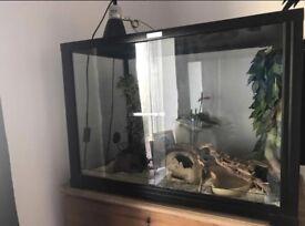 Full vivarium setup
