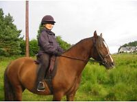 Welsh section c mare! Currently in Inverness but can be brought to Inverurie for viewings!