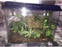 BABY CRESTED GECKO COMPLETE SET UP EVERYTHING YOU NEED!