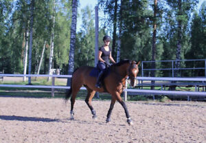 Advanced rider/young horse trainer looking for a horse to lease