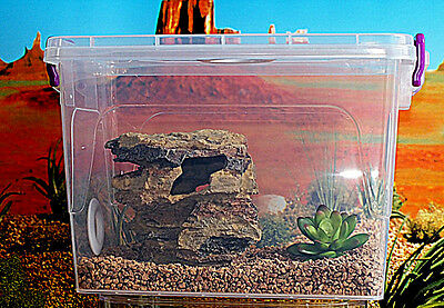 Tarantula Praying Mantis,Stick Insect,Reptile Vivarium.Cage,Tank,Enclosure