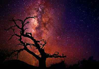 PETER LIK TREE OF THE UNIVERSE