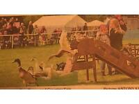 Family tickets to East Anglian Game & country fair