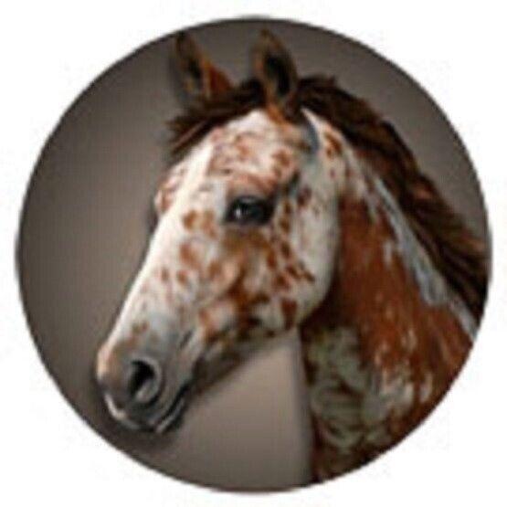 CLEARANCE..Vinyl APPALOOSA Horse Round Car/Truck Flexible Magnet