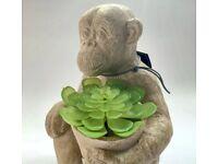 NEXT Botanicals Monkey Plant Pot Ornament (New &Boxed)