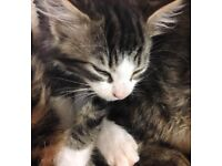 Kittens looking for loving permanent homes