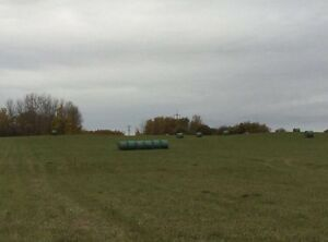Round bales for horse feed