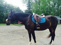 Beautiful horse for sale