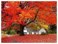 Fall Cleanups & Landscaping