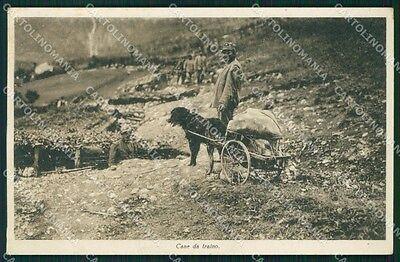 Trento ? Cane da Traino War Dog Militari cartolina QT4279