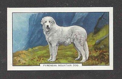 1938 UK Art Body Gallaher Cigarette Card GREAT PYRENEES PYRENEAN MOUNTAIN DOG