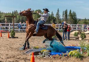 Pension pour chevaux,Box,Entre-deux,Extérieur