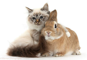 Offering: Cat or Bunny Babysitting Services