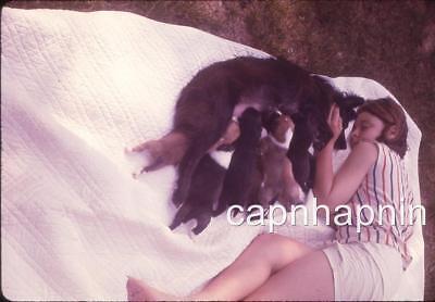 Kid Girl On Blanket Comforts Mama Dog Nursing Pups Sweet Vintage Slide Photo