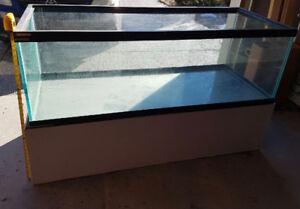 Terrarium/Aquarium Large!