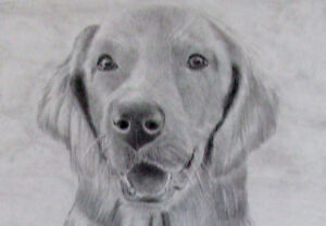 Learn how to draw Animals St. John's Newfoundland image 1