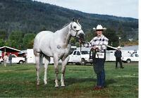 Standing at Sud..16.2 AQHA N/N Gray Stallion