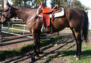 QH Gelding For Sale