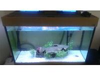 Aqua One 220 Litre 3.3 ft Aquarium Fisk Tank Including Lights - NEEDS TO GO FAST... HENCE PRICE.