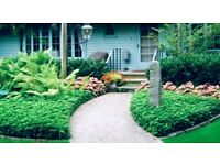 Tailored Landscaping and Gardening