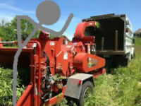 Tree removal services Whitby and  GTA 647-458-1341