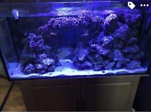 Aquarium 90 g eau salé