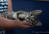 Seeking responsible adopters for 3 kittens