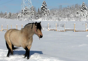 Pension/demi-pension pour chevaux secteur Shipshaw