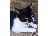 Lost black & white cat