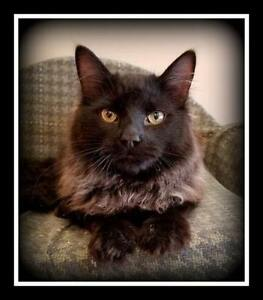 FIXED FRIENDLY CATS @ SMALL THINGS -- $160 to $60