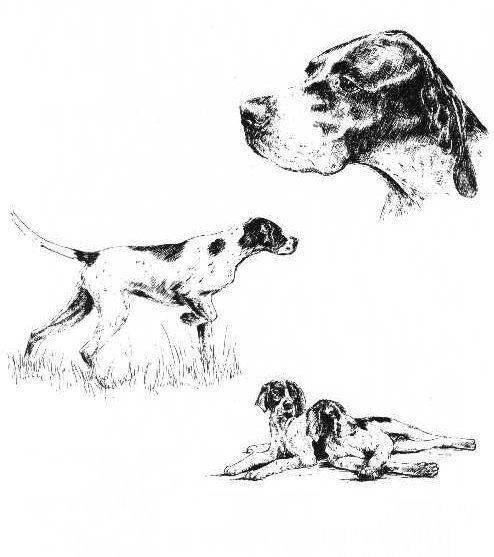 Pointer - 1963 Vintage Dog Print - Matted *