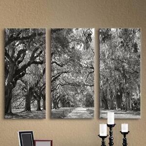 Live Oak Avenue' by Steve Ainsworth 3 Piece Photographic Print on Wrapped Canvas Set