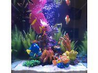Finding Dory Starter Aquarium 18Litre