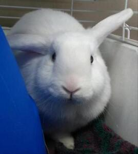 "Adult Female Rabbit - Bunny Rabbit: ""Cloud"""